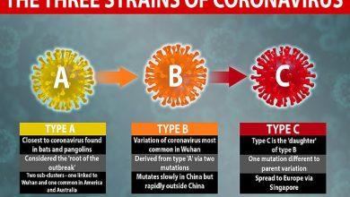 Photo of Analýza: Tři druhy koronaviru a falešná, vylhaná epidemie