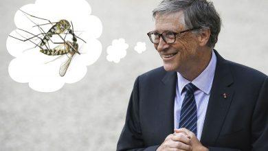 Photo of Bill Gates plánuje vypouštět v USA geneticky modifikované komáry. Chce tak prý snížit jejich počet. Příprava na depopulaci planety?
